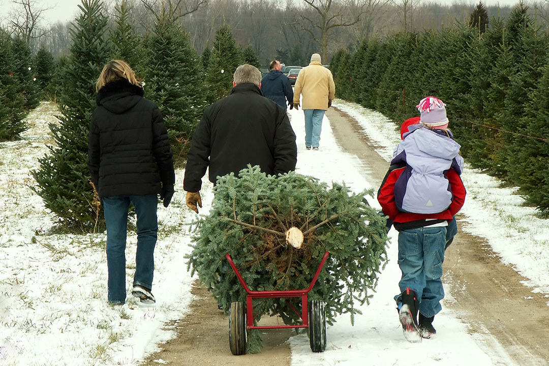 Home - RI Christmas Tree Growers Association