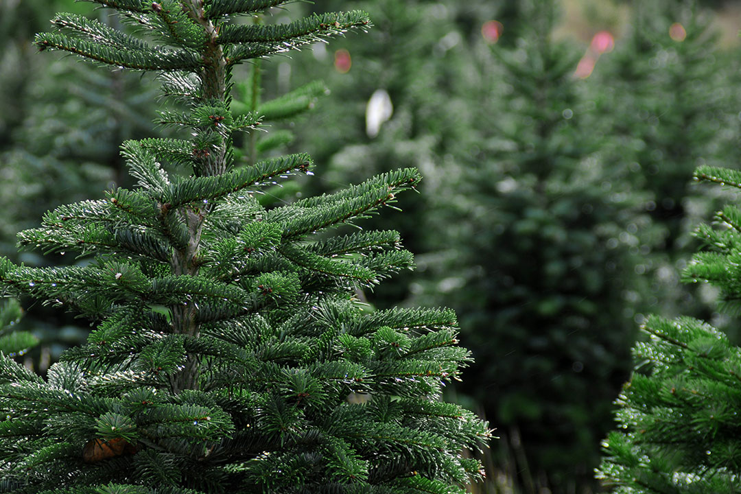 RI Christmas Tree Growers Association